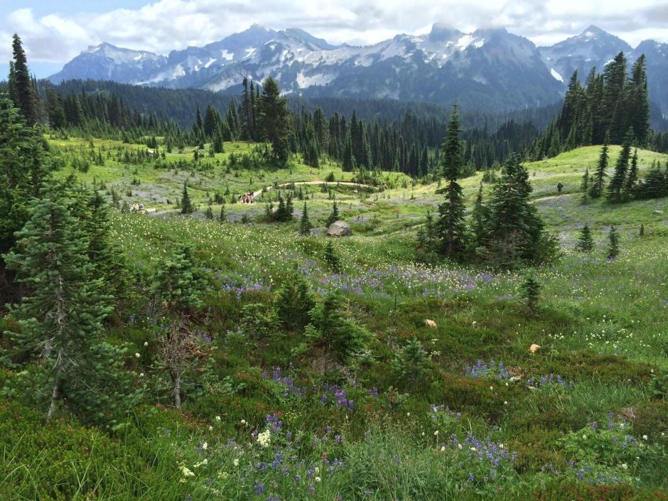 Vast alpine gardens in Paradise.